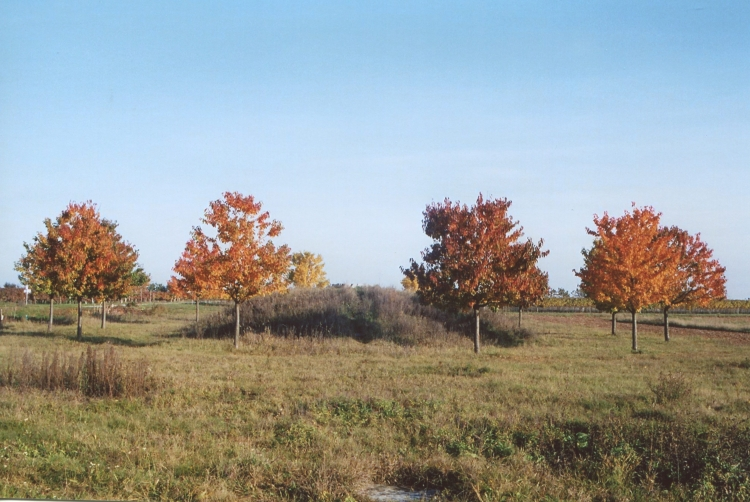 Herbst auf der Himmelsleiter