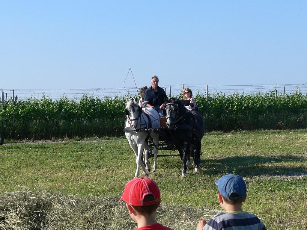 Pferdekutschenfahrt beim Musikfest auf der Himmelsleiter